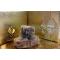 Ceylan Göbeği Katı Misk - Yoğun Miski Amber 5GR